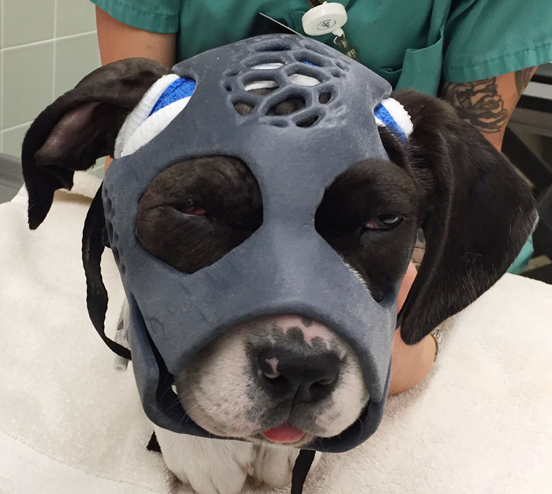 3D Printed Mask Helps Heal Dog's Skull