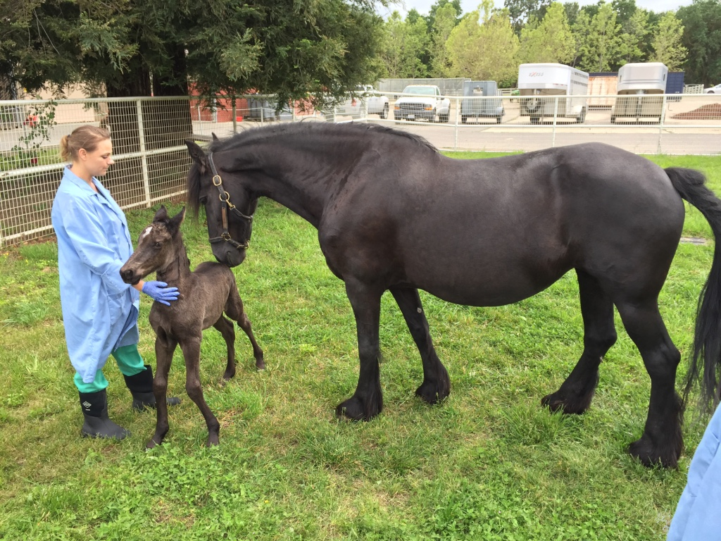 Neonatal Intensive Care Unit Cares for Sick Foals
