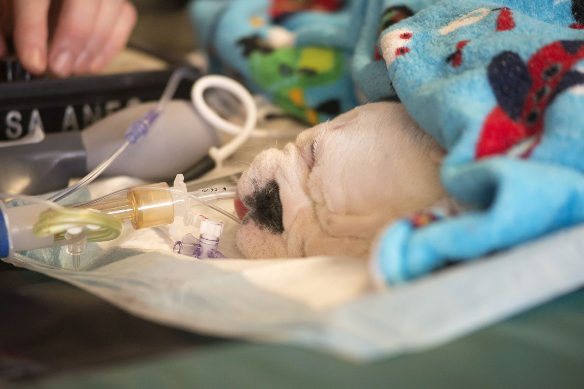 Stem Cell Treatment for Spina Bifida Helps Dogs and Children