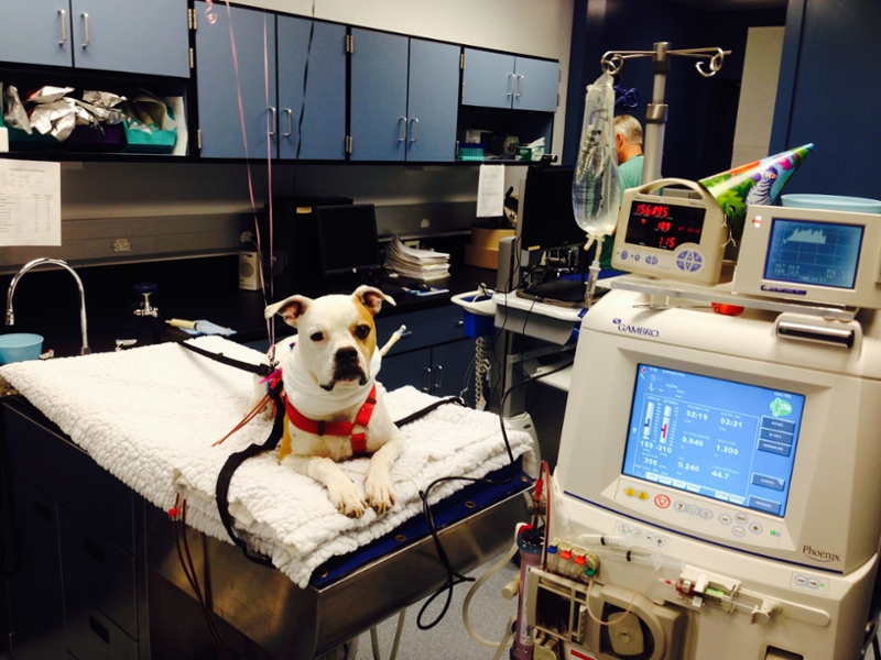 Image result for dialysis machine dogs