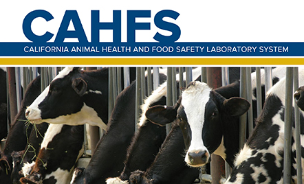 CAHFS Annual Report