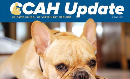 CCAH Update - Center for Companion Animal Health