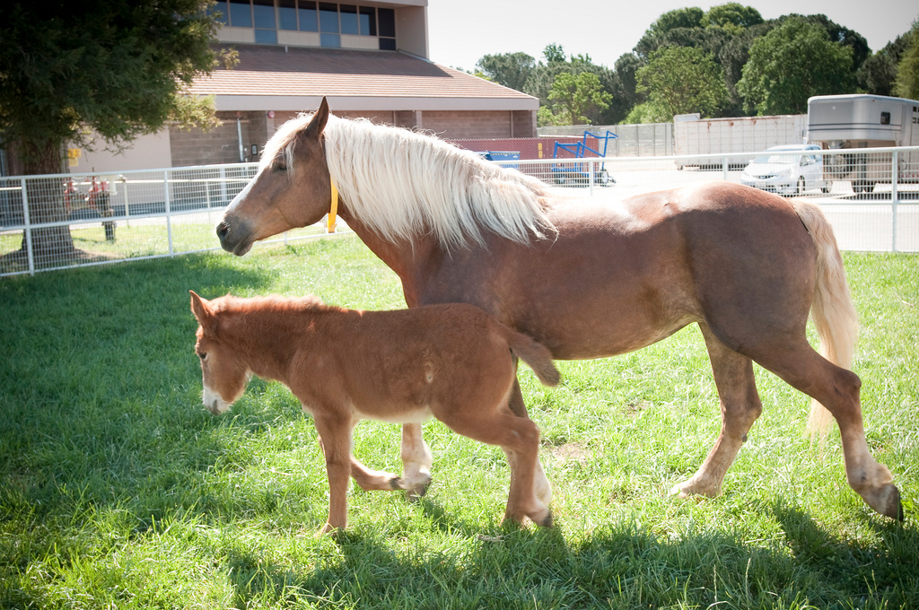 Equine Reproduction Service