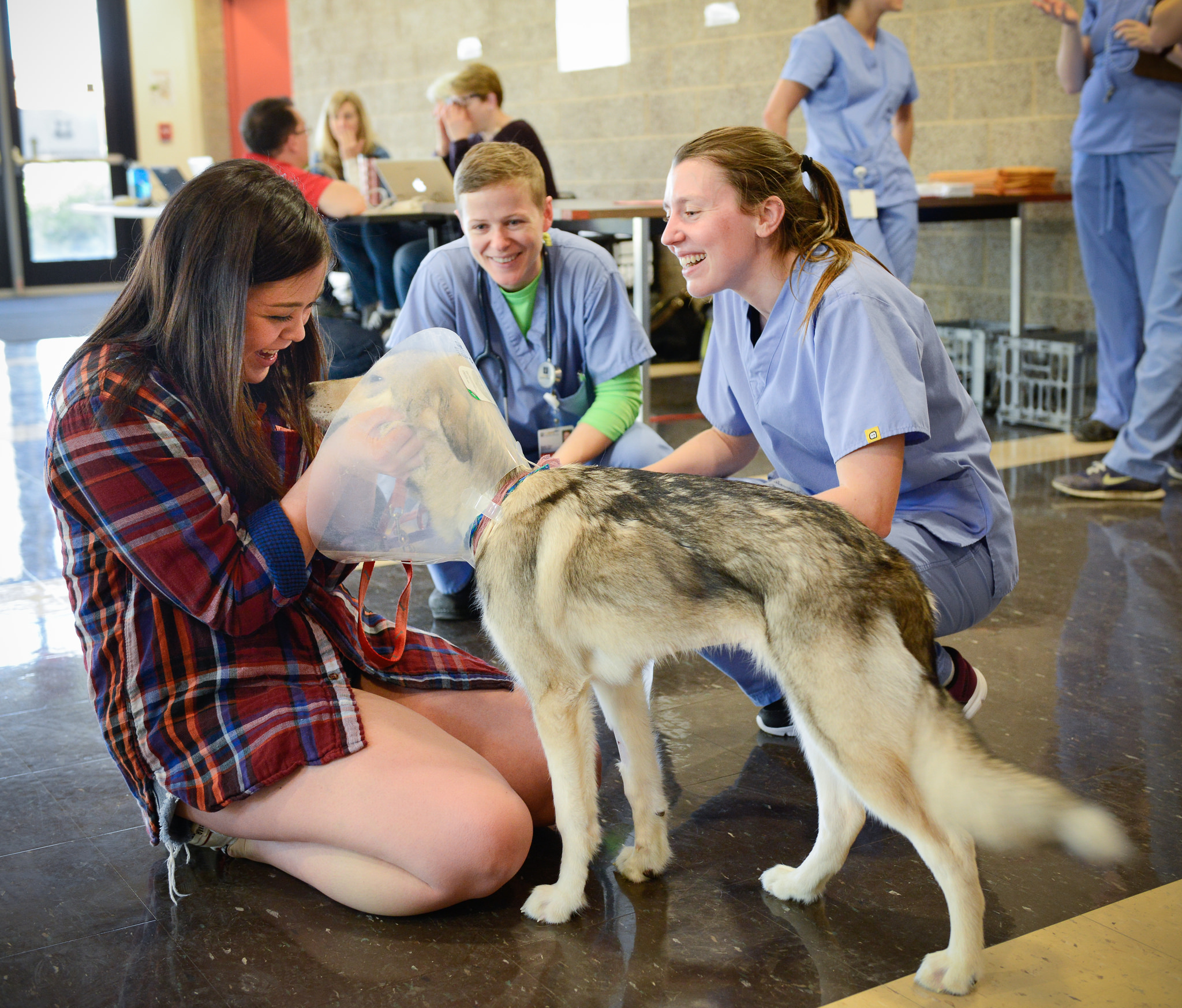 volunteers at UC Davis veterinary hospital