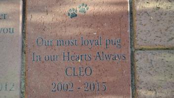 Our most loyal pug, In our Hearts Always, Cleo 2002 - 2015