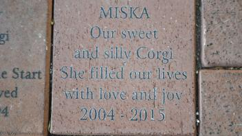 Miska, Our sweet and silly Corgi, She filled our lives with love and joy 2004 - 2015