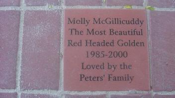 Molly McGillicuddy The Most Beautiful Red Headed Golden 1985-2000 Loved by the Peters' Family