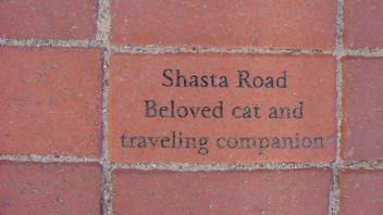 Shasta Road. Beloved cat and traveling companion.