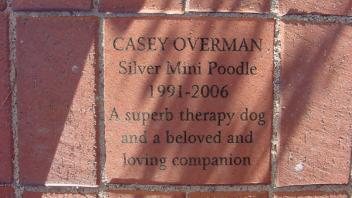 Casey Overman, Silver mini poodle 1991-2006. A superb therapy dog and beloved and loving companion