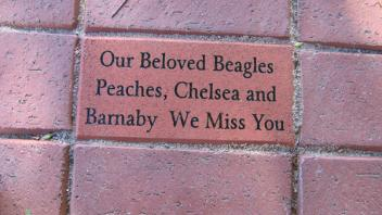 Our Beloved Beagles; Peaches, Chelsea and Barnaby; We Miss You