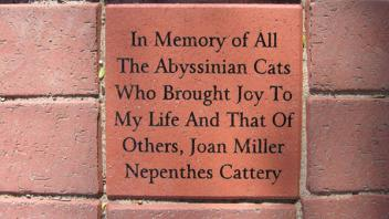 In Memory of All The Abyssinian Cats Who Brought Joy To My Life And That of Others, Joan Miller Nepenthes Cattery