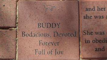 Buddy Bodacious, Devoted Forever Full of Joy