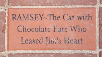 Ramsey ~ The Cat with Chocolate Ears Who Leased Jim's Heart