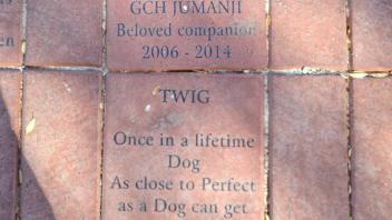 GCH Jumanji Beloved companion 2006 - 2014; Twig Once in a lifetime Dog As close to Perfect as a Dog can get