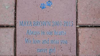 Maya Brown 2001-2015 Always in our hearts, We love and miss you sweet girl
