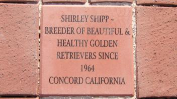 Shirley Shipp ~ Breeder of Beautiful & Health Golden Retrievers Since 1964 Concord California