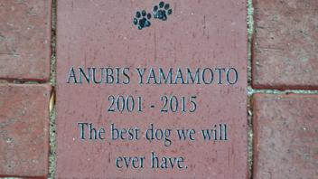 Anubis Yamamoto 2001 - 2015 The best dog we will ever have