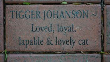 TIGGER JOHANSON ~ Loved, loyal, lapable & lovely cat