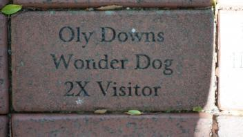 Oly Downs Wonder Dog 2X Visitor
