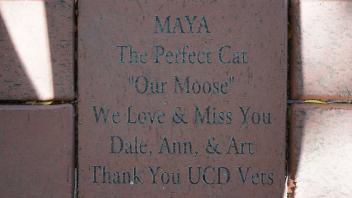 "MAYA The Perfect Cat ""Our Moose"" We Love & Miss You Dale, Ann, & Art Thank You UCD Vets"