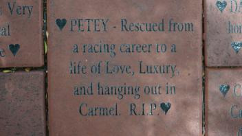 PETEY - Rescued from a racing career to a life of Love, Luxury, and hanging out in Carmel.  R.I.P.