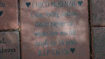 CHICO McKENZIE Calm, loving cowboy, dancer rapster cat, whose love was felt deeply for 16 years R.I.P. Chi Chi