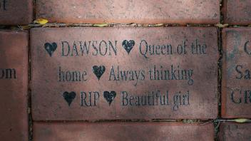 DAWSON  Queen of the home Always thinking RIP Beautiful girl