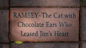 RAMSEY~The Cat with Chocolate Ears Who Leased Jim's Heart