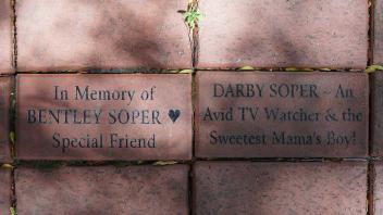 In Memory of BENTLEY SOPER Special Friend  /  DARBY SOPER ~ An Avid TV Watcher & the Sweetest Mama's Boy!