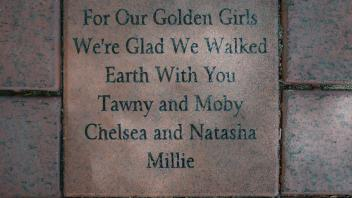 For Our Golden Girls We're Glad We Walked This Earth With You Tawny and Moby Chelsea and Natasha  Millie