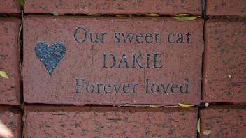 Our sweet cat DAKIE Forever Loved
