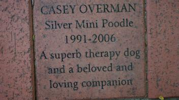CASEY OVERMAN Silver Mini Poodle 1991-2006 A superb therapy dog and a beloved and loving companion