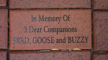 In Memory Of 3 Dear Companions FRED, GOOSE and BUZZY
