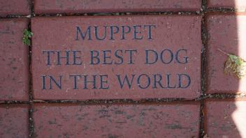 Muppet, The Best Dog in the World