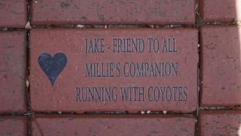 JAKE - FRIEND TO ALL MILLIE'S COMPANION RUNNING WITH COYOTES