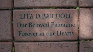 LITA D BAR DOLL Our Beloved Palomino Forever in our Hearts