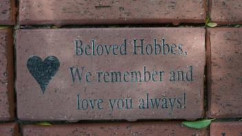 Beloved Hobbes, We remember and love you always!