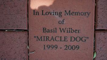 "In Loving Memory of Basil Wilber ""MIRACLE DOG"" 1999 - 2009"