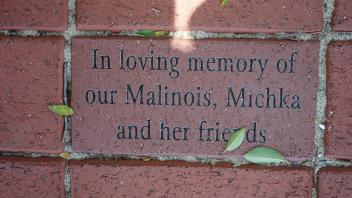 In loving memory of Our Malinois, Michka And her friends