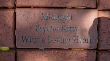 Midnight Psycho Kitty With a Loving Heart