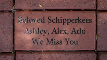Beloved Schipperkees Ashley, Alex, Arlo  We Miss You
