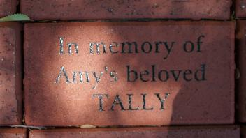 In memory of Amy's beloved TALLY