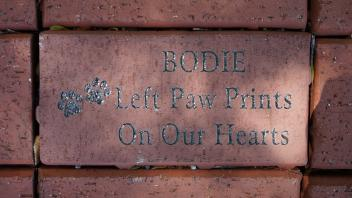 BODIE Left Paw Prints On our Hearts
