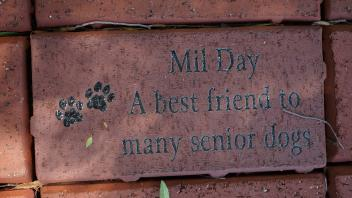 Mil Day A best friend to many senior dogs