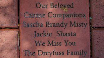 Our Beloved Canine Companions Sascha  Brandy Misty  Jackie  Shasta We Miss You The Dreyfuss Family