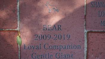 BEAR 2009-2019 Loyal Companion Gentle Giant