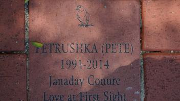 PETRUSHKA (PETE) 1991-2014 Janaday Conure Love At First Sight