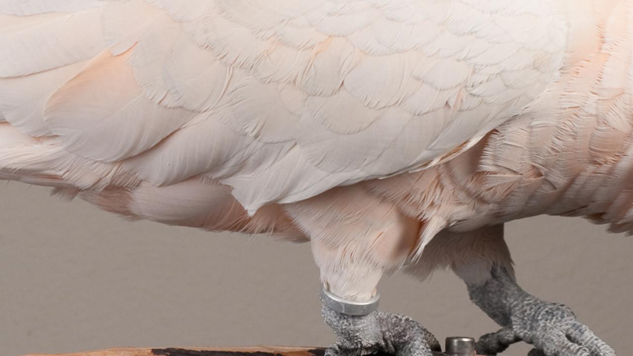The Richard M. Schubot Parrot Wellness