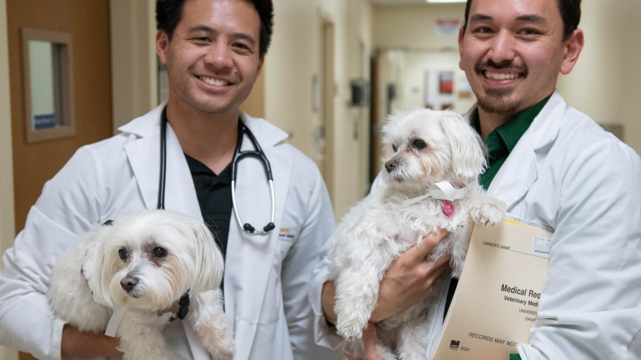 Students in hospital holding dogs