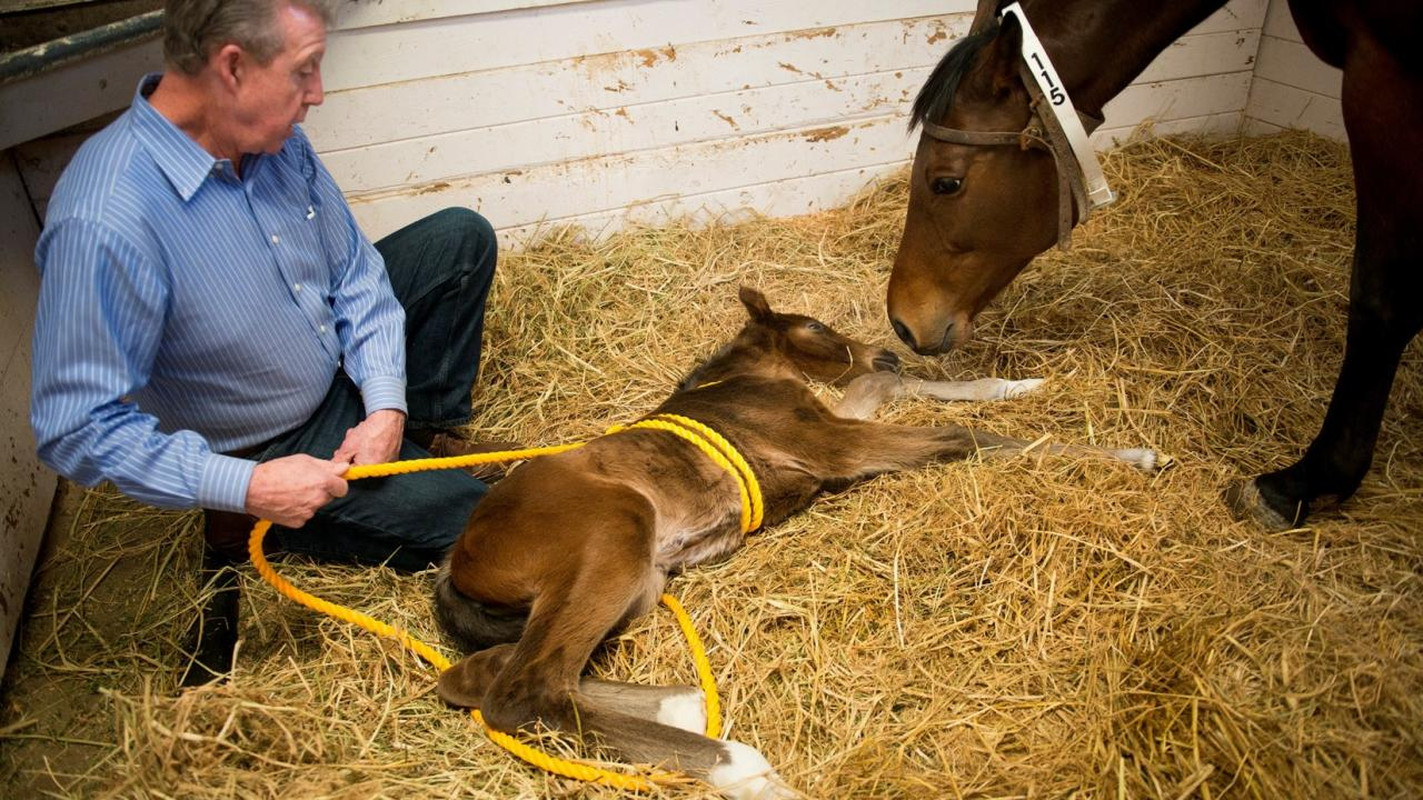Dr. John Madigan with a foal